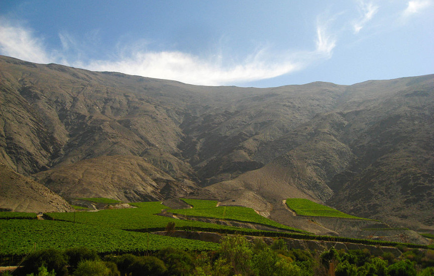 chilean-vineyards-by-arturus-oceanicus